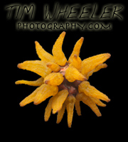 Tim Wheeler Photography