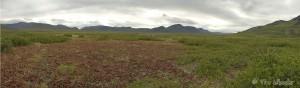 Upper Nigu River Valley with Arctostaphylos