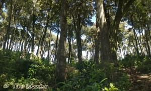 Olivillo Coast Forest, Reserva Costera Valdiviana