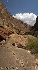 Tetrapod CanyonWM